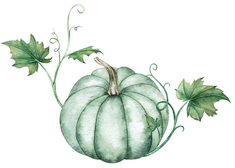 Watercolor illustration of blue pumpkin with green leaves isolated on white background. A symbol of autumn holidays. royalty free illustration