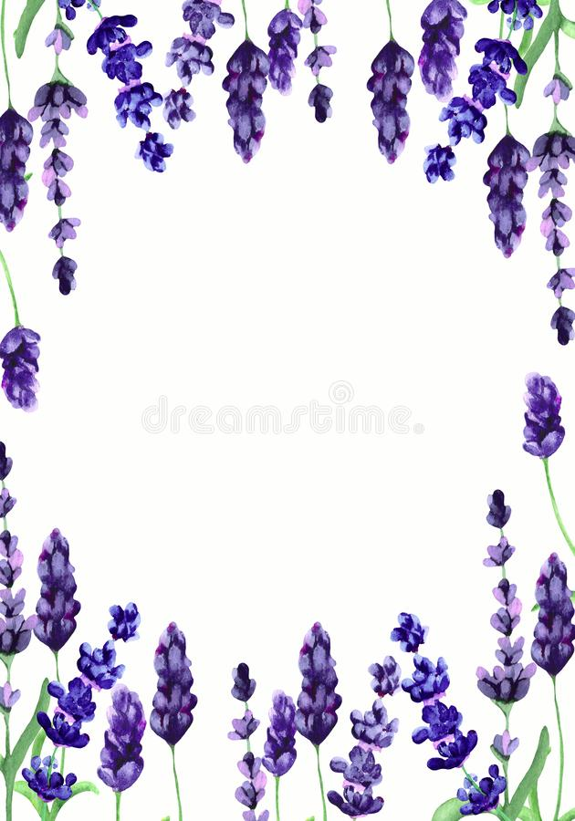 Watercolor illustration with blue and purple flowers of fragrant lavender. Bright design for cards, greetings and wedding invitati stock photos
