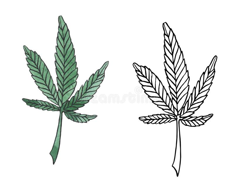 Watercolor illustration branch of Green Hemp leave stock illustration