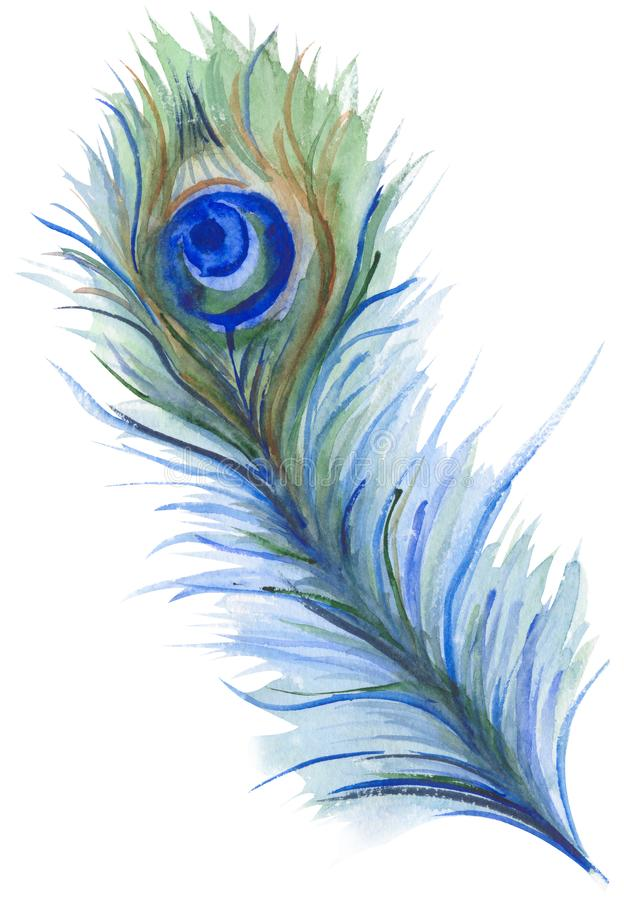 Watercolor illustration of a bright and shiny peacock feather stock illustration