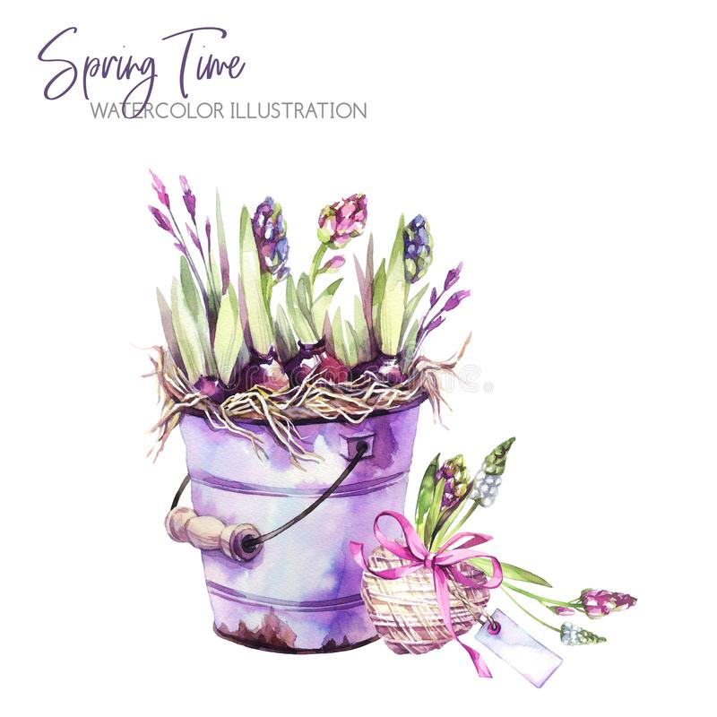 Watercolor illustration. Garden bucket with hyacinth seedlings, heart and tags. Rustic objects. Spring collection in. Violet shades. ClipArt, DIY, scrapbooking vector illustration