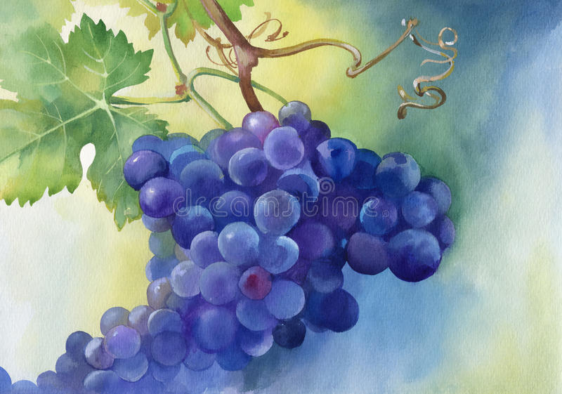 Watercolor illustration of grapes with leaves royalty free illustration