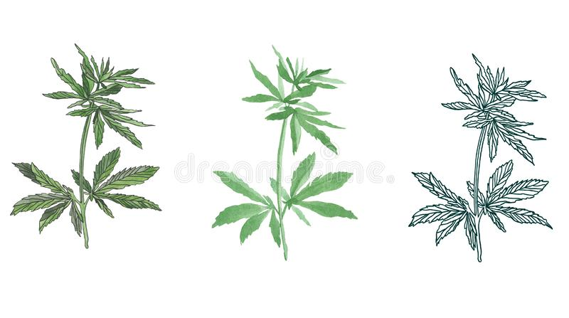 Watercolor branch of Green hemp with leaves. Watercolor illustration of big green branch hemp on white background royalty free illustration