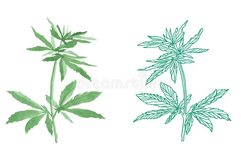 Watercolor branch of Green hemp with leaves. Watercolor illustration of big green branch hemp on white background vector illustration