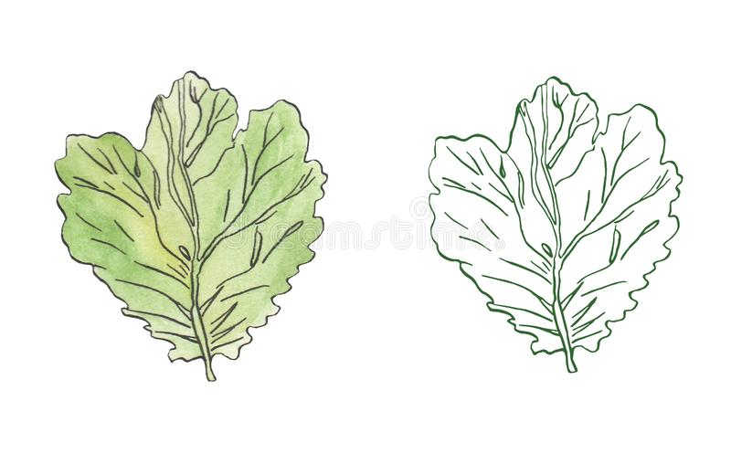 Watercolor illustration of green leaves with streaky stock illustration