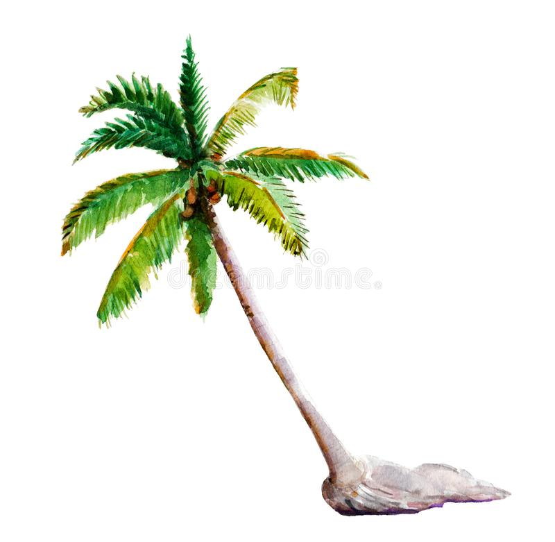 Watercolor illustration, hand drawn palm-tree isolated object on white. stock illustration