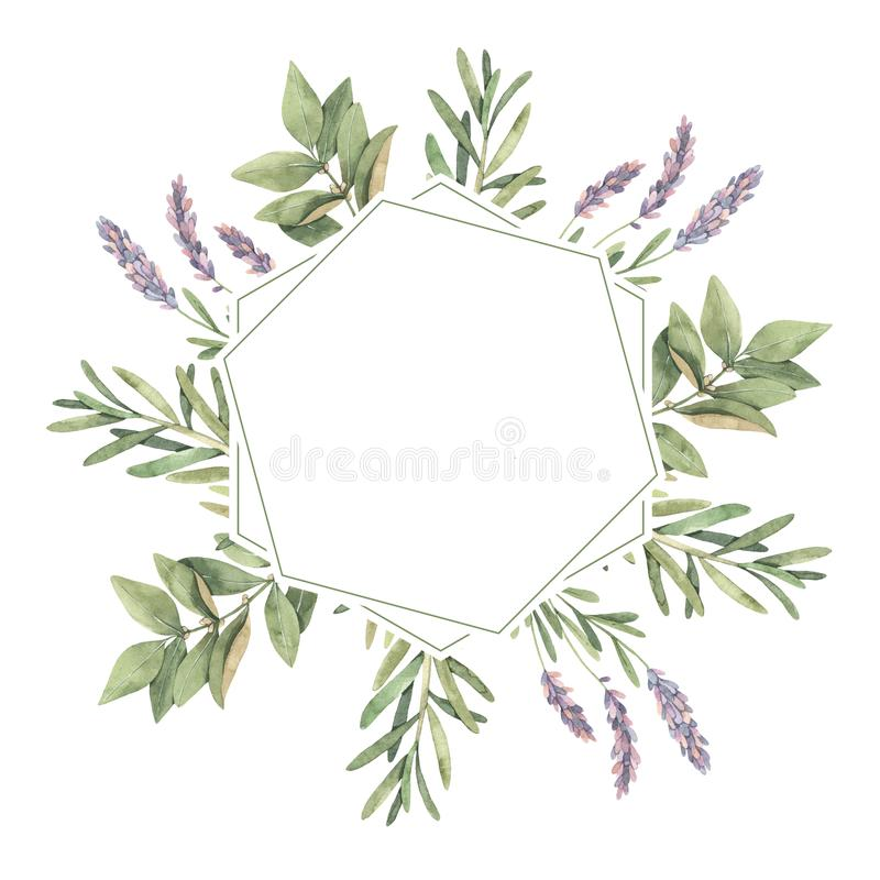 Watercolor illustration. Herbal Label with botanical green leave. S, herbs and branches. Eco. Floral Design elements. Perfect for wedding invitations, greeting vector illustration