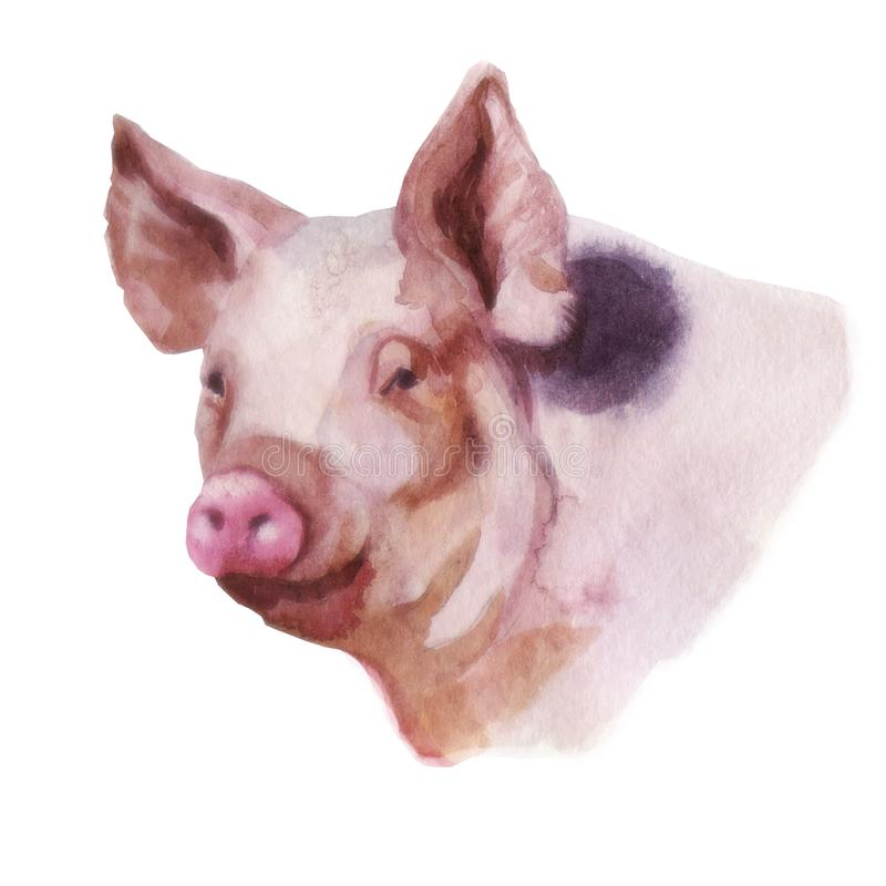 Watercolor illustration, the image of a pig. royalty free illustration