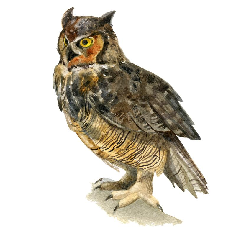 Watercolor illustration. An image of a sitting owl. vector illustration