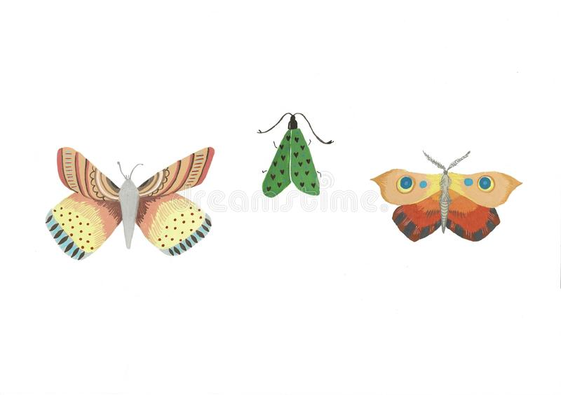 Watercolor illustration of an isolated butterfly on a white background. Set of butterfly drawings. vector illustration