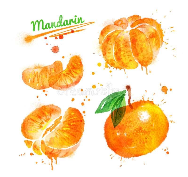 Watercolor illustration of mandarin. Whole and half, peeled and unpeeled with paint smudges and splashes royalty free illustration