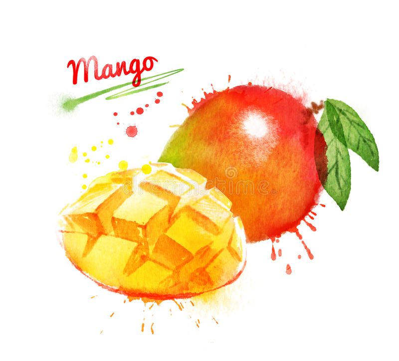 Watercolor illustration of mango. Whole and sliced with leaf and paint smudges and splashes royalty free illustration
