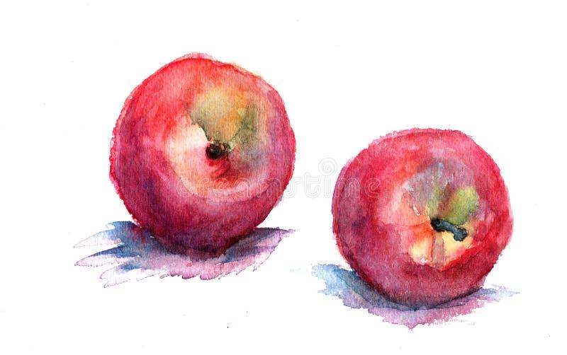 Watercolor illustration of nectarine