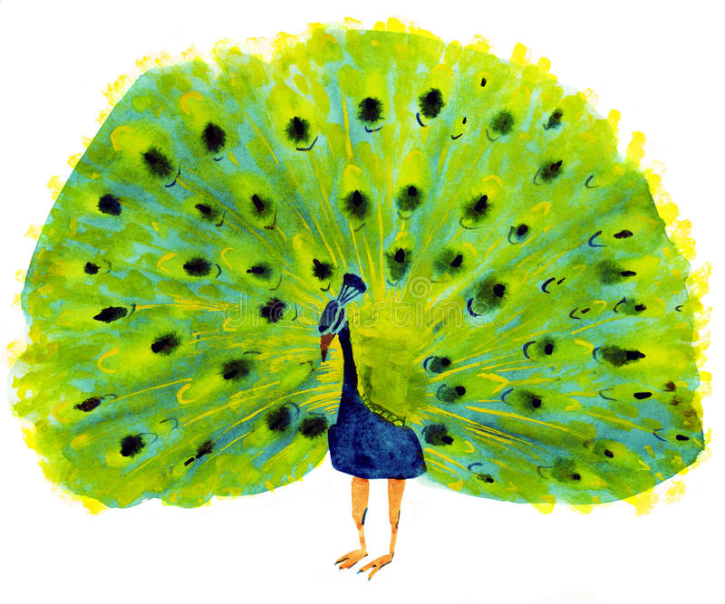 Watercolor illustration of peacock vector illustration