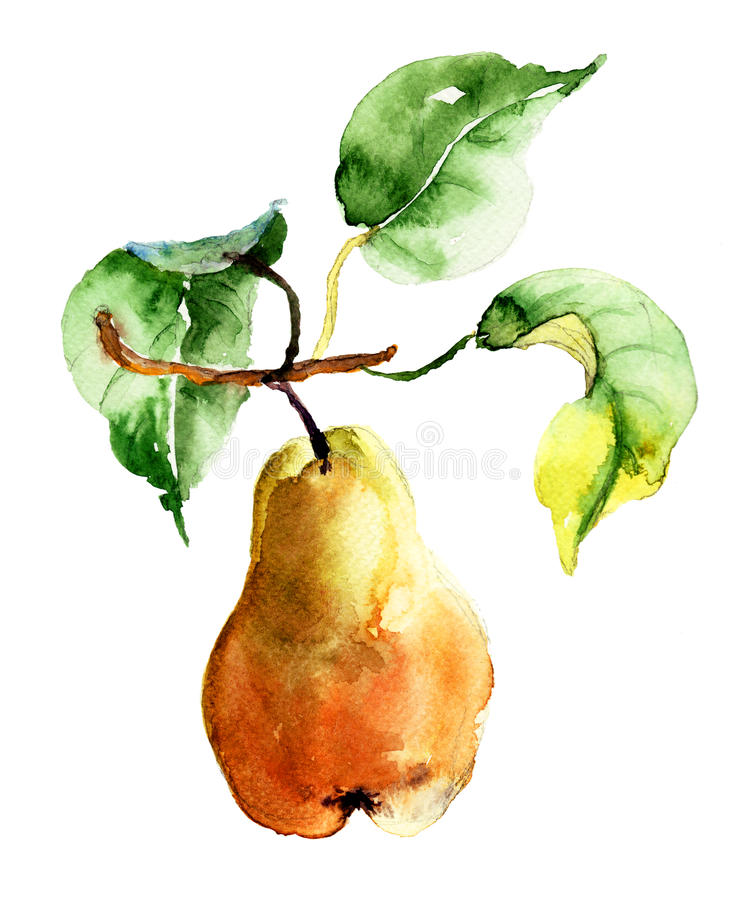 Watercolor Illustration Of Pear Stock Photography