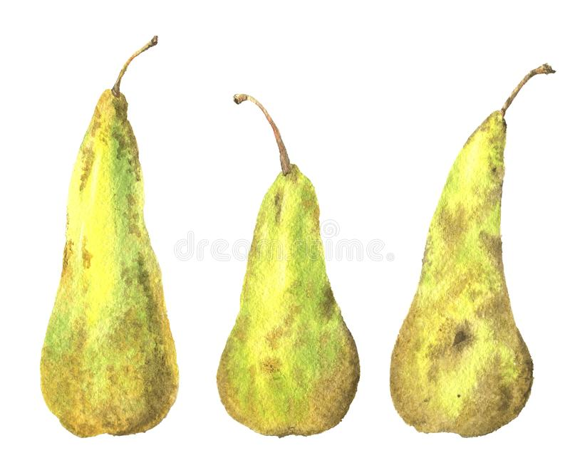 Watercolor illustration of a pear royalty free stock photography