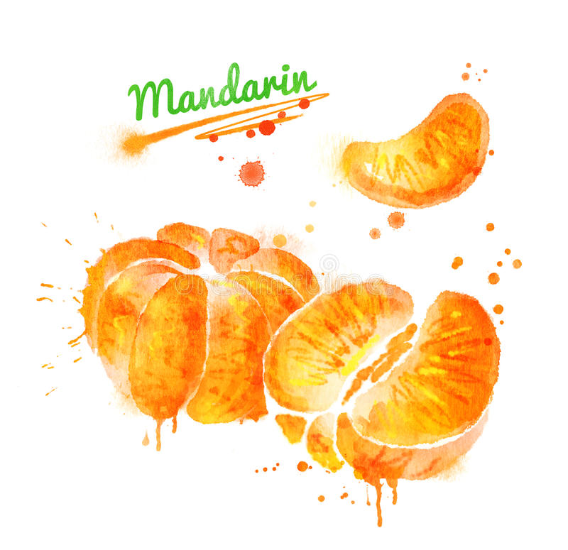 Watercolor illustration of peeled mandarin. Whole, half and segmentrwith paint smudges and splashes stock illustration