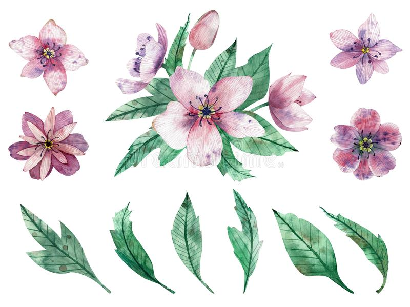 Watercolor illustration of pink flower compositions and elements isolated on white background stock illustration