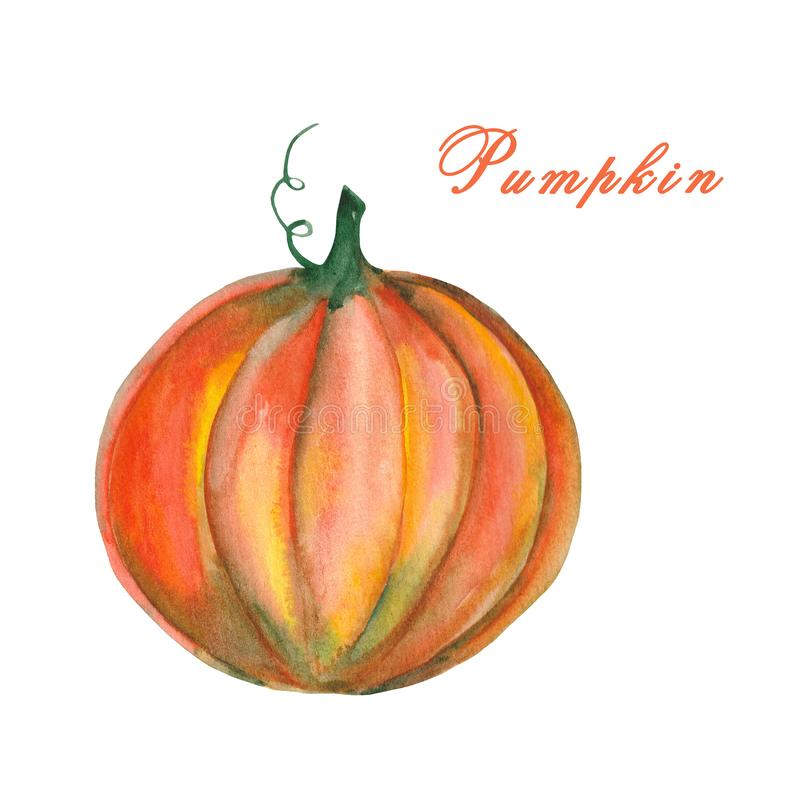 Watercolor illustration of a pumpkin on white buckground. stock illustration