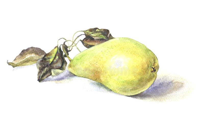 watercolor Illustration réaliste Poire illustration stock