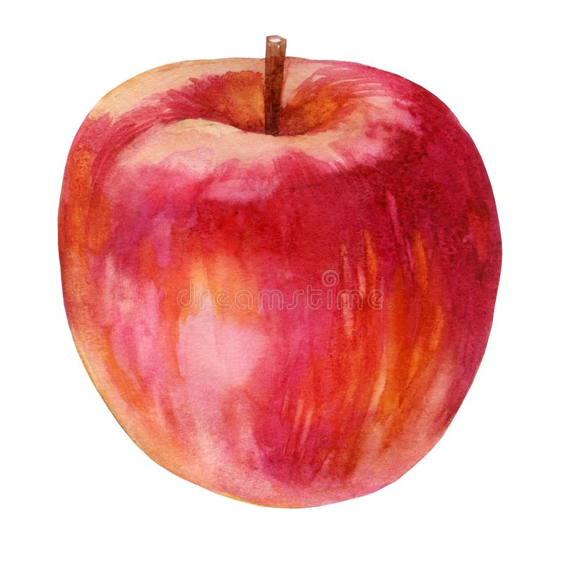 Watercolor illustration. Red Apple. One stock illustration