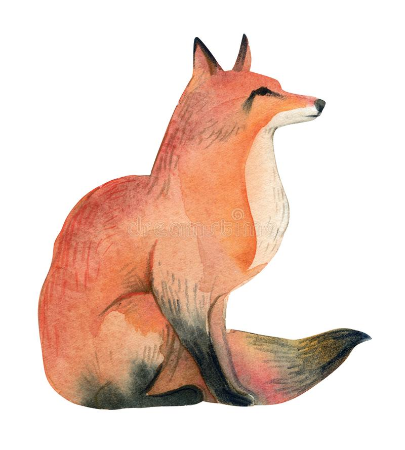Watercolor illustration of red wild fox on white background. Realistic forest animal sketch stock illustration