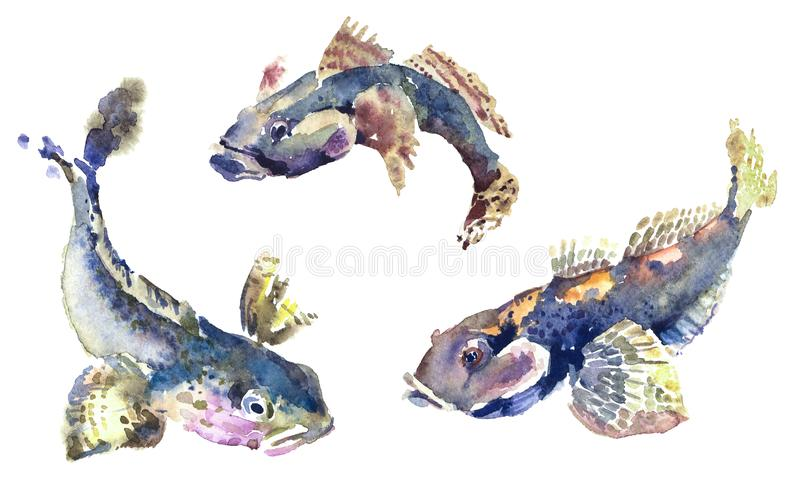 Watercolor illustration of sea fish. royalty free stock photography