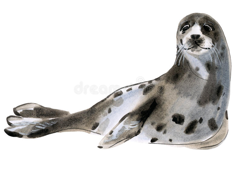 Watercolor illustration of seal in white background. vector illustration