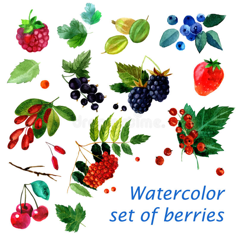 Watercolor illustration of a set of different berries image. transparent watercolor different shades. Labels, background, card, pa royalty free illustration