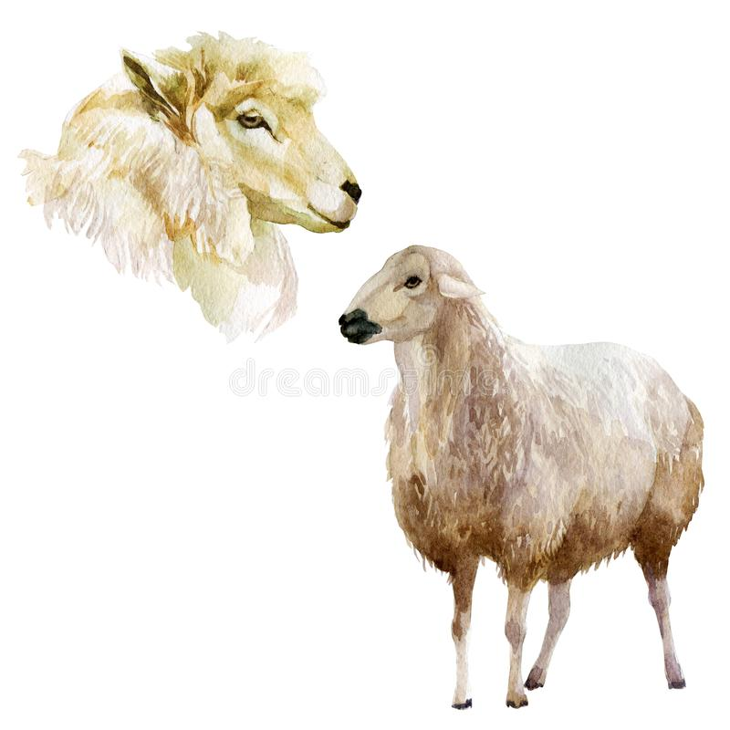 Watercolor illustration, set. Farm animals, sheep, head of a sheep. royalty free illustration