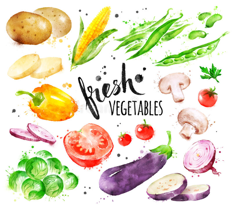 Watercolor illustration set of fresh vegetables stock illustration