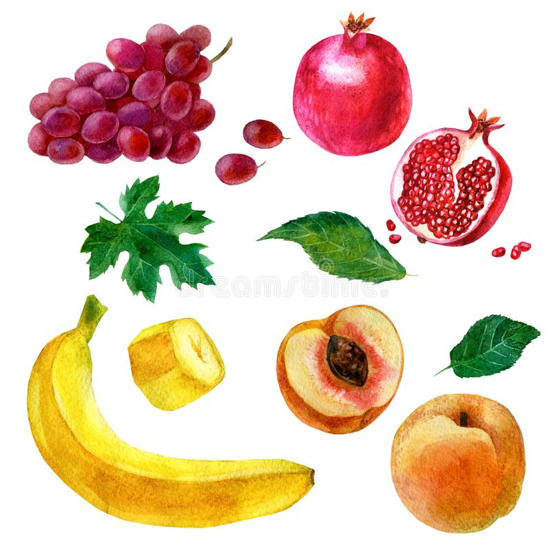 Watercolor illustration, set. Image of fruits, grapes, banana, pomegranate, peach stock illustration