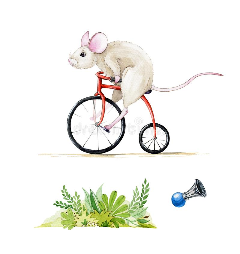 Watercolor illustration set of a mouse riding a red bike. Hand drawn watercolour set of a rat, isolated on white background. royalty free illustration