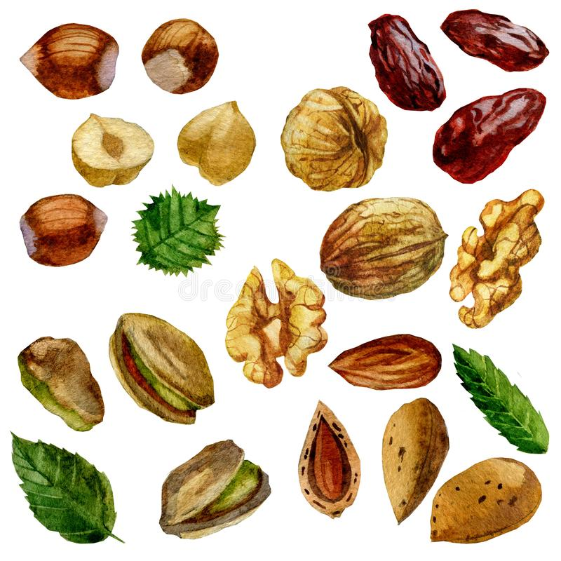 Watercolor illustration, set. Nuts, hazelnut, pistachios, walnut, almond and date fruit. vector illustration