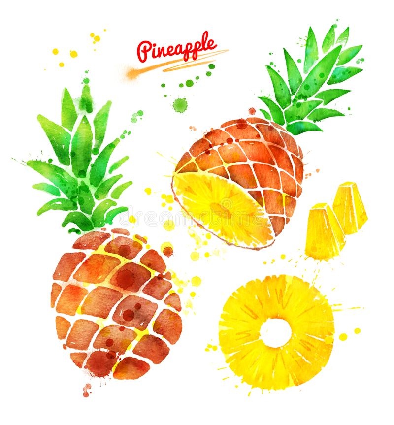 Watercolor illustration set of pineapple royalty free illustration