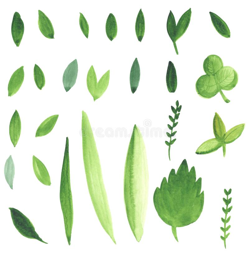 Watercolor illustration of a set of simple green leaves drawn by hand. Elements for design royalty free illustration