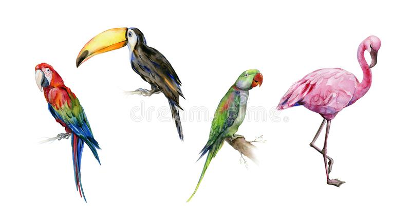 Watercolor illustration set of tropical birds. royalty free stock photos