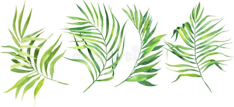 Watercolor illustration set of tropical leaves. Coconut palm leaves. Dense jungle. royalty free illustration