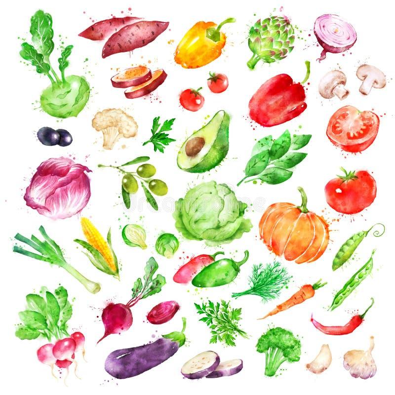 Watercolor illustration set of vegetables. Hand drawn watercolor illustration set of vegetables with paint splashes royalty free illustration