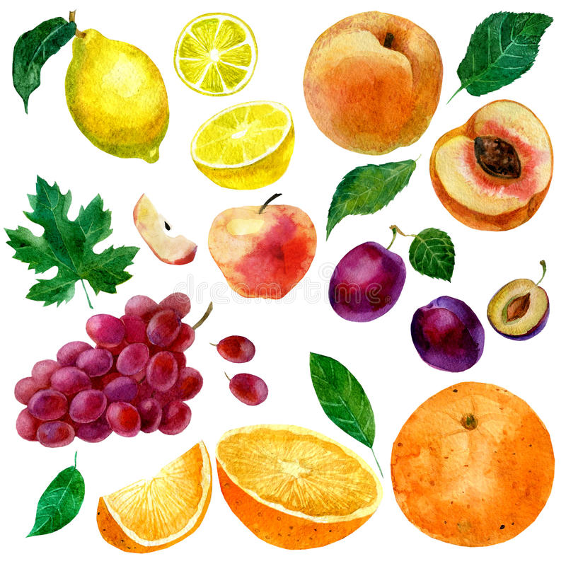 Watercolor illustration, set of watercolor fruit, parts and leaves, peach, plum, lemon, orange, apple and grapes. vector illustration