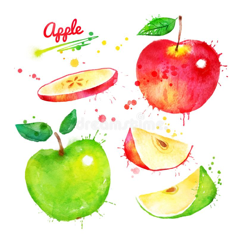 Watercolor illustration set of apples vector illustration