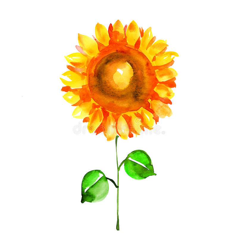 Watercolor illustration of single isolated sunflower. royalty free illustration