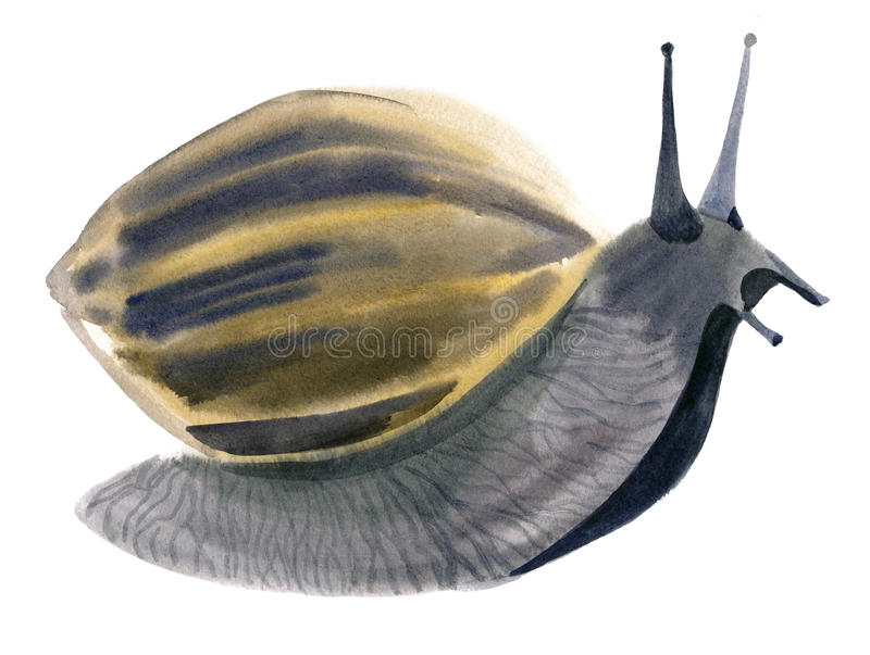 Watercolor illustration of snail in white background. royalty free illustration