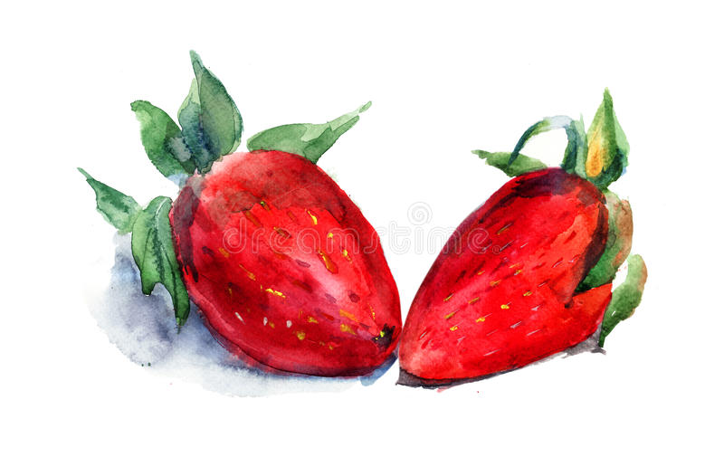 Watercolor illustration of strawberry vector illustration