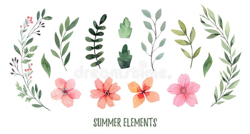 Watercolor illustration. Summer foliage. Botanical collection of. Green leaves, branches, flowers and herbs. Perfect for wedding invitations, greeting cards vector illustration