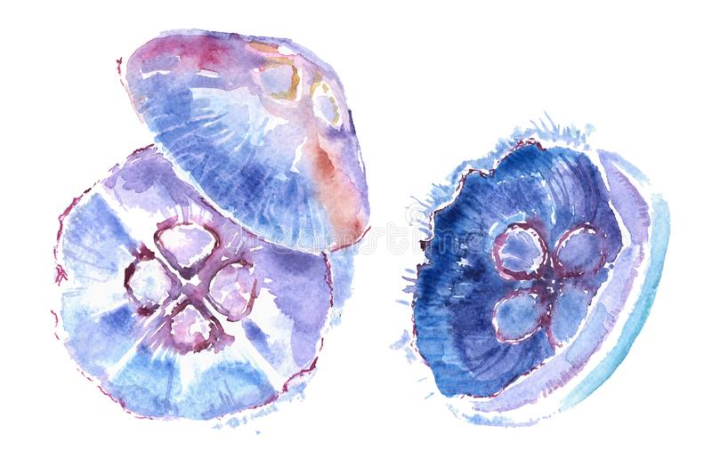 Watercolor illustration of beautiful jellyfish. stock photo