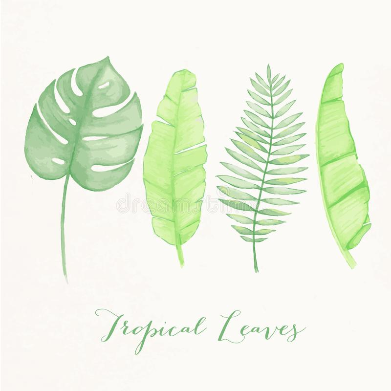 Watercolor illustration of tropical leaves stock photo