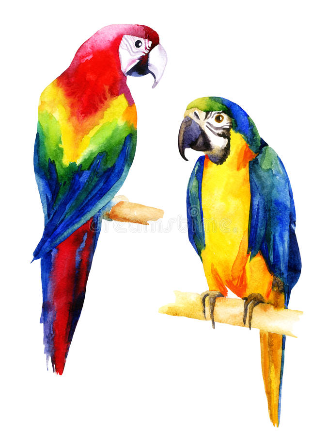 Watercolor Illustration Of Two Parrots Stock Illustration