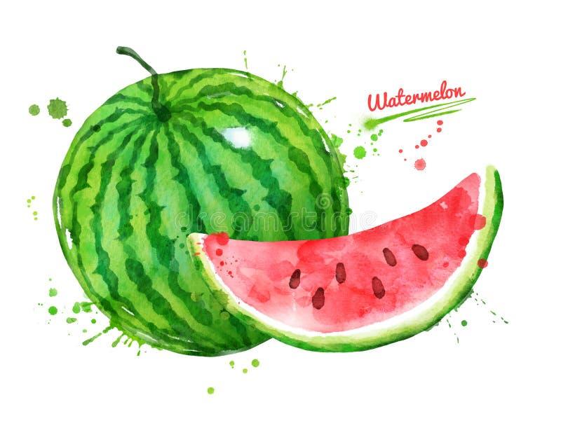 Watercolor illustration of watermelon stock illustration