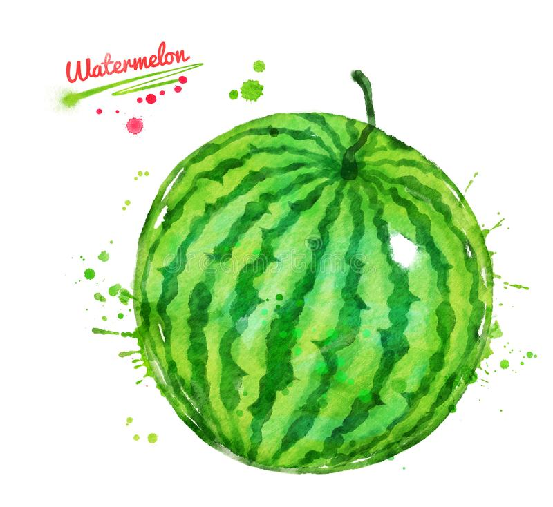 Watercolor illustration of whole watermelon royalty free illustration